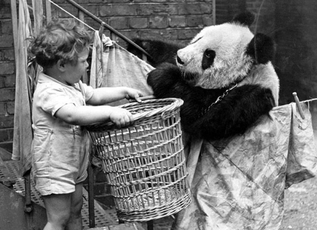 a-panda-discussing-the-problems-of-the-day-over-the-washing-line-with-a-young-admirer-1939