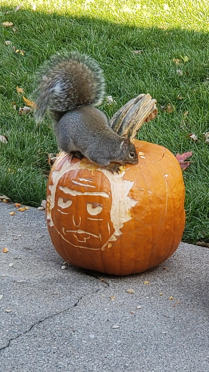 the-squirrels-found-us-morty