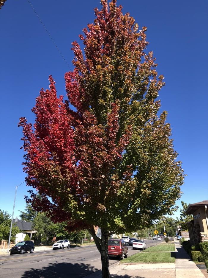 autumn-showing-off-its-color-palette