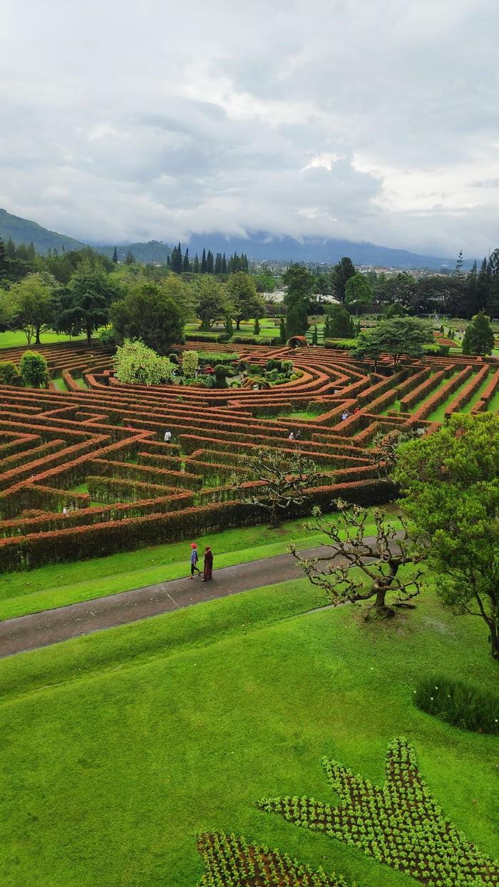 what-an-amazeing-garden