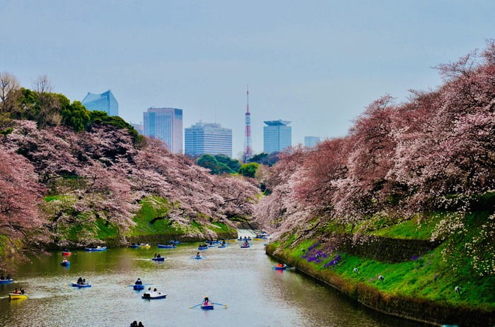 chidorigafuchi-in-tokyo