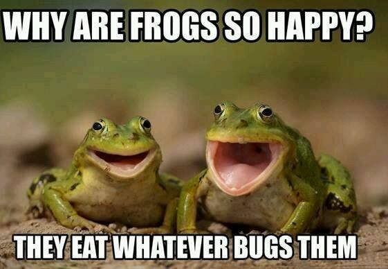 eat-whatever-bugs-you