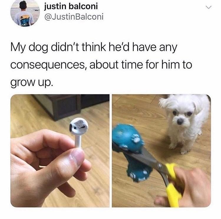 poor-doggo