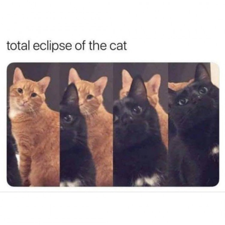 the-cutest-eclipse-ever