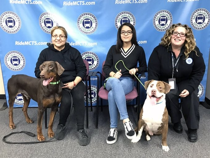 a-bus-driver-picked-up-2-lost-dogs-and-gets-them-home-in-time-for-christmas