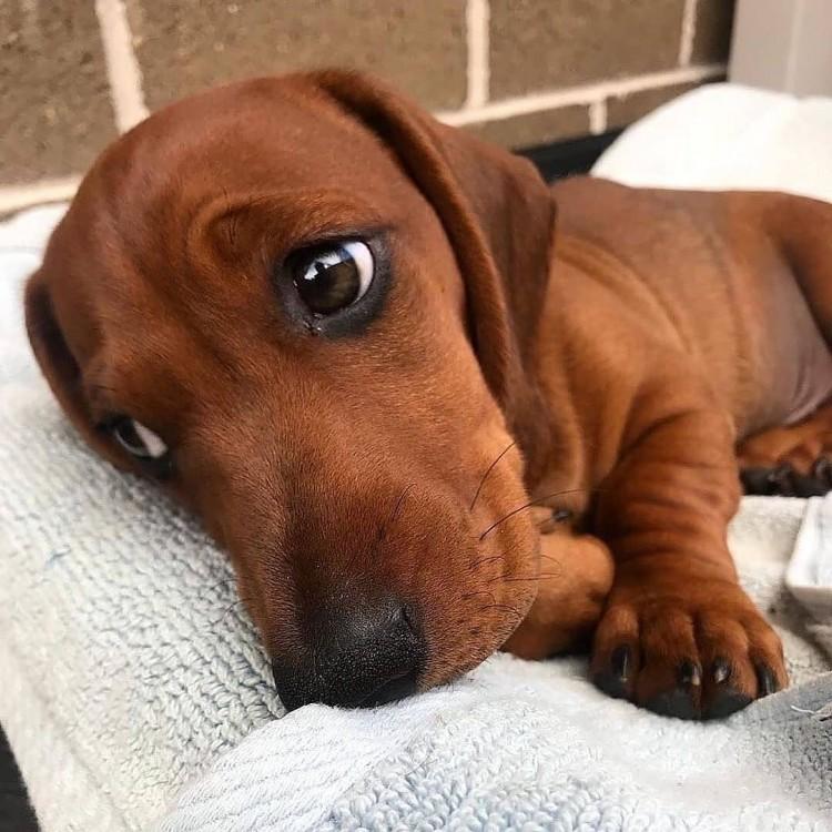 lovely-eyes