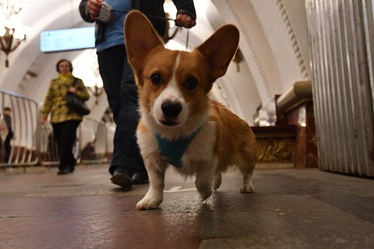 in-russia-local-authorities-are-planning-to-introduce-a-tax-on-dogs
