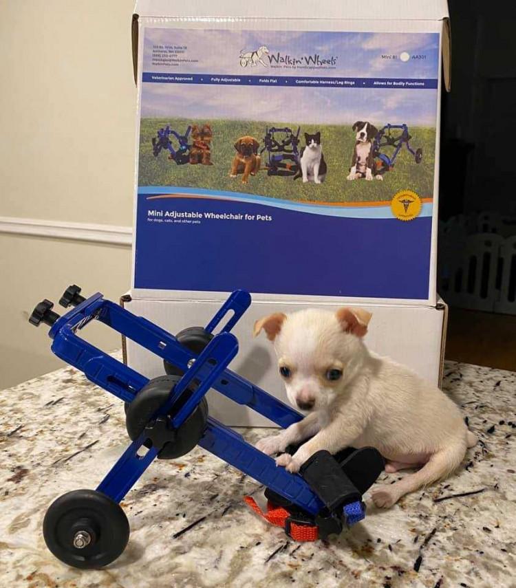 a-viral-video-made-magic-happen-for-a-little-puppy
