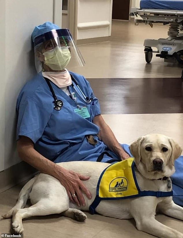 meet-the-dog-that-is-helping-frontline-hospital-workers-to-battle-coronavirus-pandemic