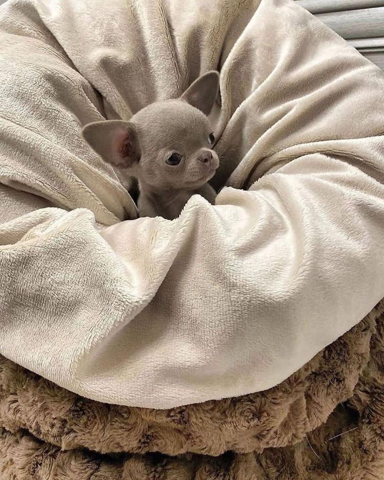 small-buddy