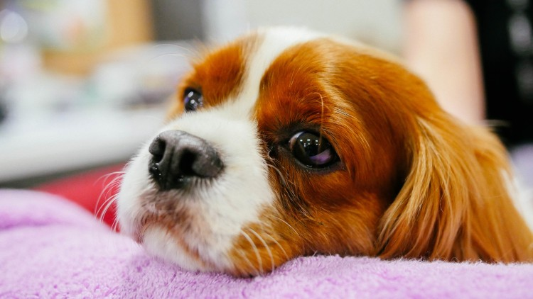 how-pets-help-us-overcome-the-coronavirus-crisis-and-chase-away-anxiety