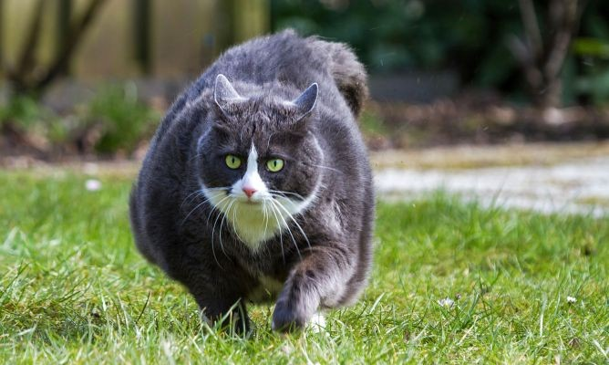 a-funny-cat-video-on-the-internet-is-going-viral-portraying-how-life-will-look-after-the-pandemic