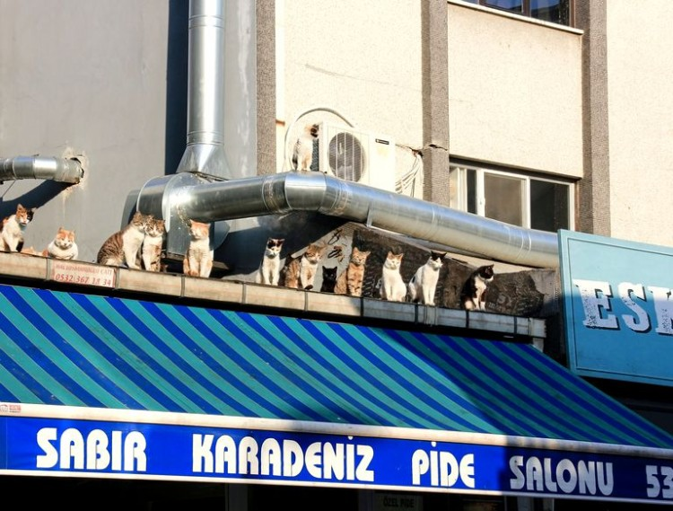 in-turkey-animals-without-a-owner-will-be-fed-by-the-authorities-during-the-pandemic-order-from-turkeys-interior-ministry