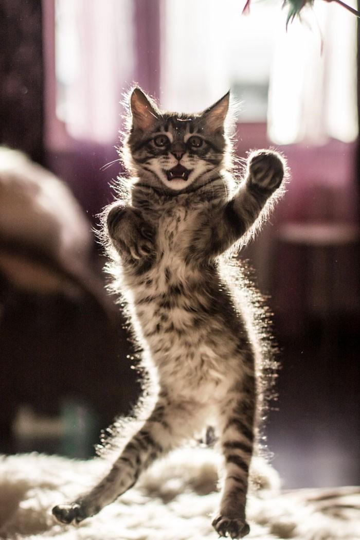 funny-cat-video-playing-billie-eillish-bad-guy