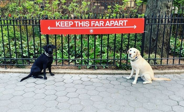 not-only-people-respect-social-distancing-rules-animals-are-also-following-the-recommendation-of-who-in-order-to-stop-spreading-the-coronavirus-pandemic-20-funny-pictures