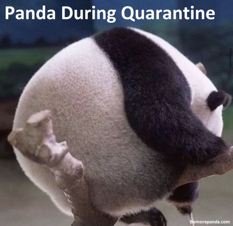 life-of-a-panda-during-quarantine