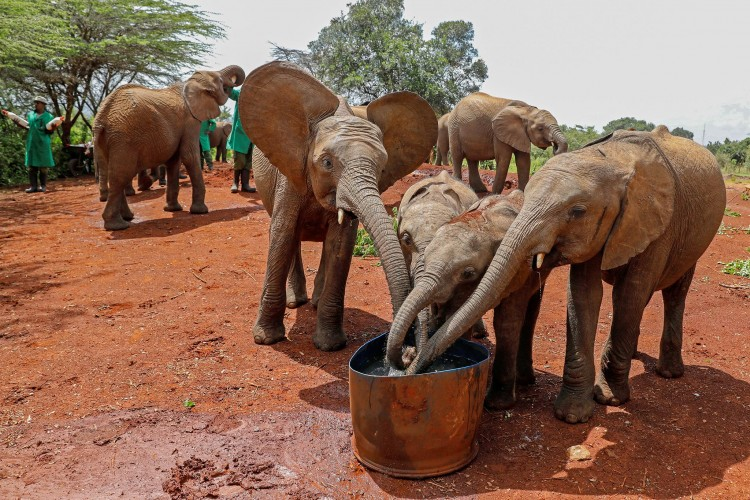 how-elephants-and-rhinos-survive-in-a-pandemic-african-unprotected-wildlife