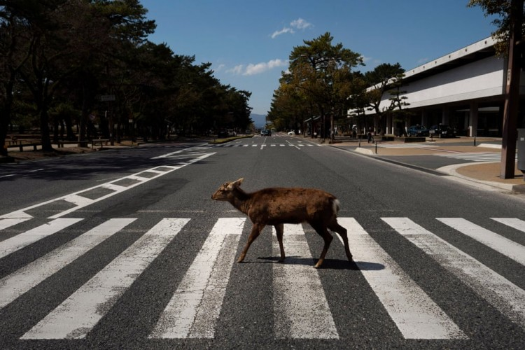collection-of-top-50-pictures-that-proves-wild-animals-are-taking-over-the-deserted-cities-during-coronavirus-lockdown