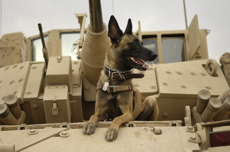 how-did-the-dogs-save-the-soldiers-during-the-war