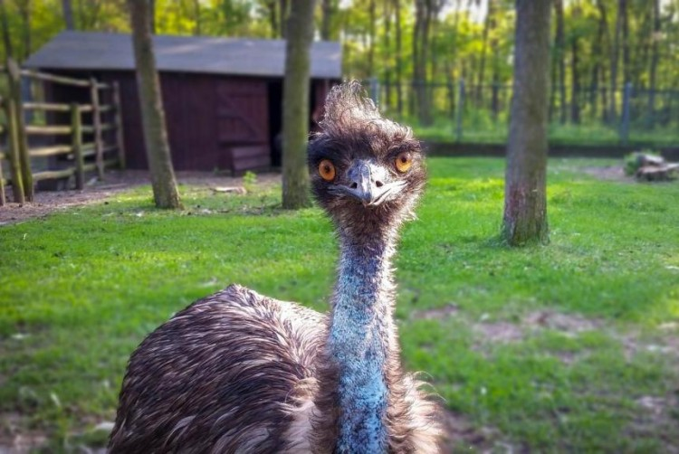 instead-of-a-lost-camel-the-police-in-netherlands-found-an-emu