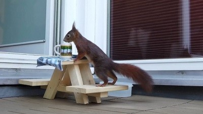 this-cute-squirrel-has-a-private-picnic-table-plate-and-even-a-beer-mug
