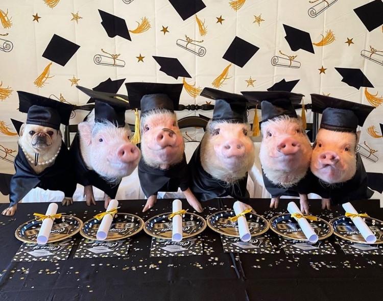 meet-the-graduation-class-of-2020
