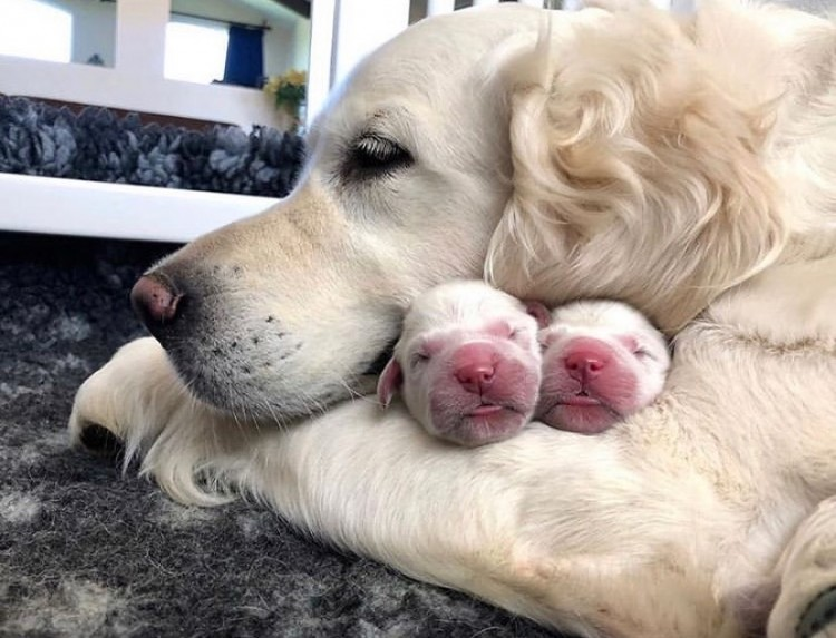 the-most-adorable-dog-hugging-their-cute-little-puppies