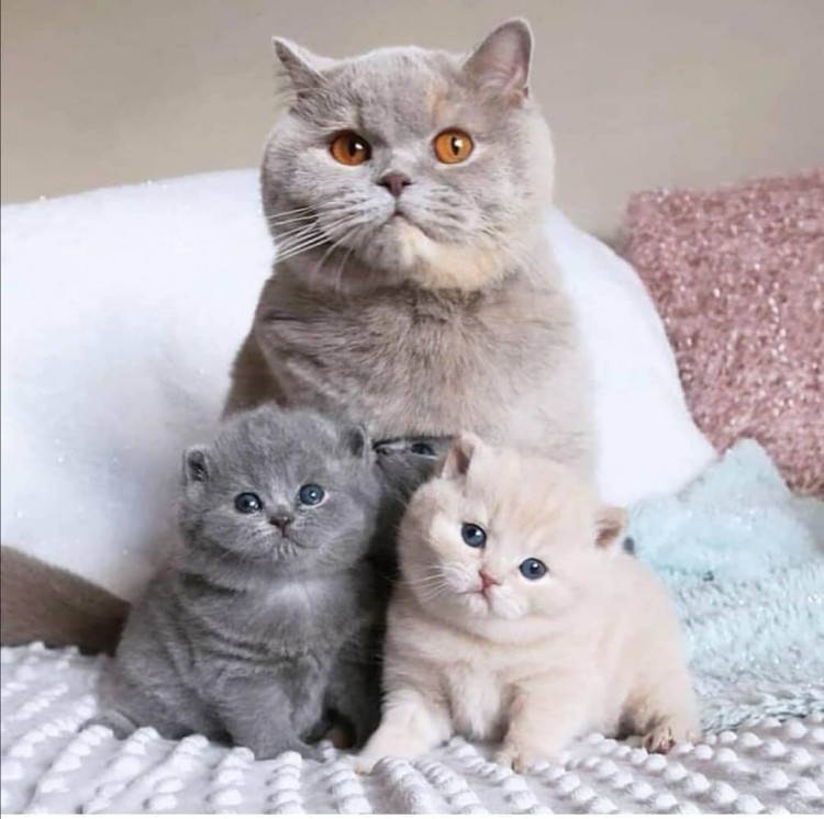 thats-a-cute-cat-family