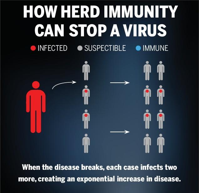 how-group-immunization-against-coronavirus-worked-in-the-netherlands
