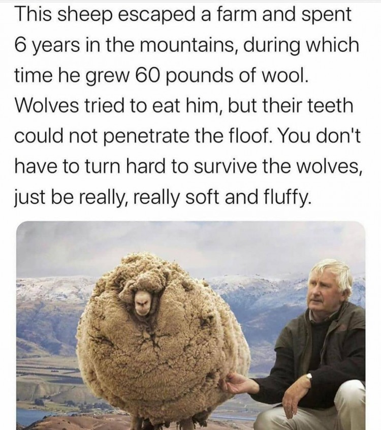 the-story-of-a-sheep