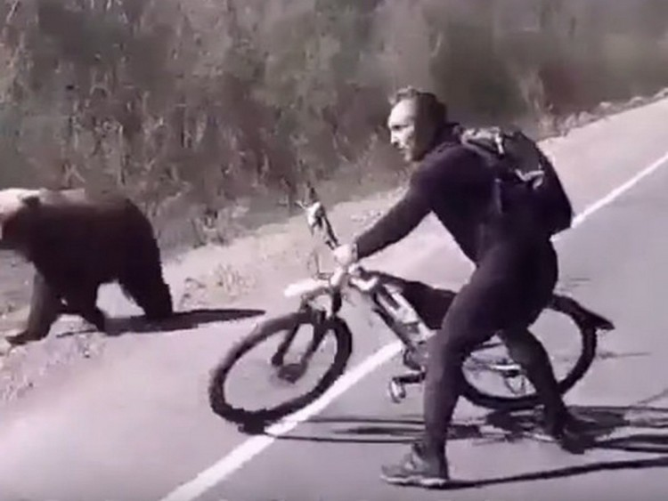 a-bicycle-saved-a-russian-from-death-in-a-bear-fight-video
