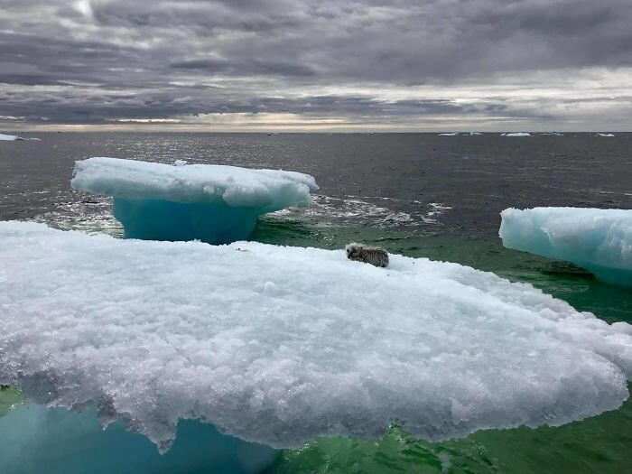 fishermen-thought-they-had-stumbled-upon-a-seal-floating-on-an-iceberg