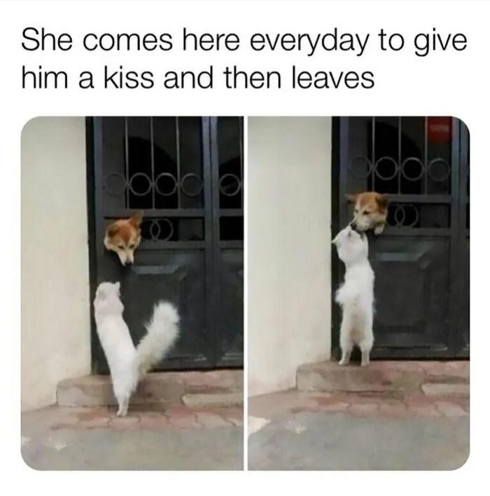 cat-and-doggo-friends
