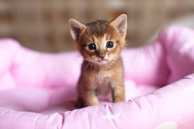 30-cute-kitty-photos-to-make-your-day-happier