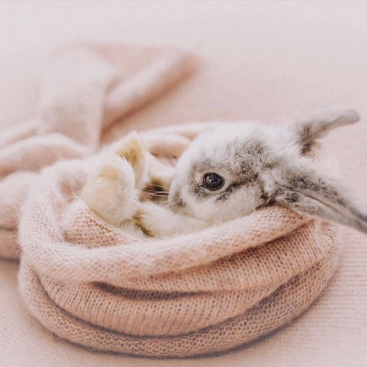 baby-bunnies-are-taking-over-the-internet-compilation-of-top-30-funny-videos