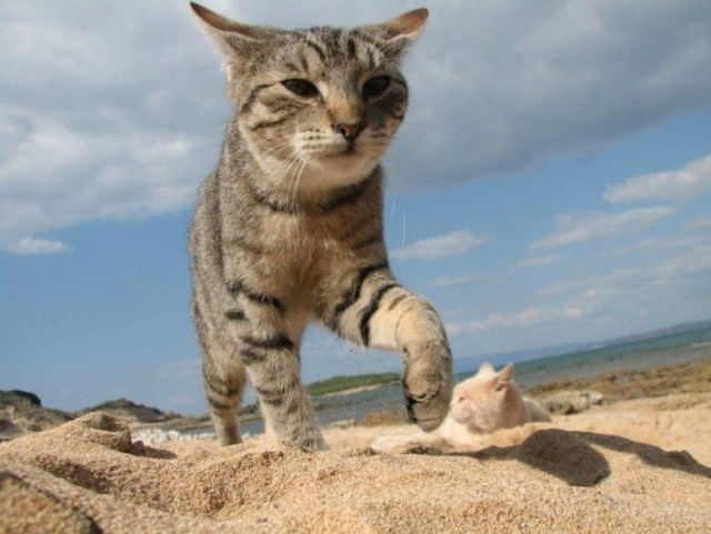in-italy-there-is-a-beach-full-of-cats