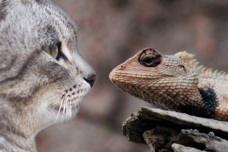 20-funny-pictures-when-cats-were-friends-with-lizards-and-when-they-failed