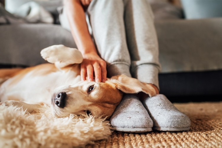 your-dog-is-much-more-happier-if-you-cuddle-him-compilation-of-best-30-videos