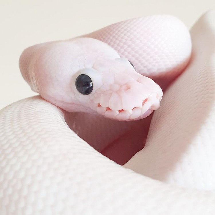 is-this-snake-cute