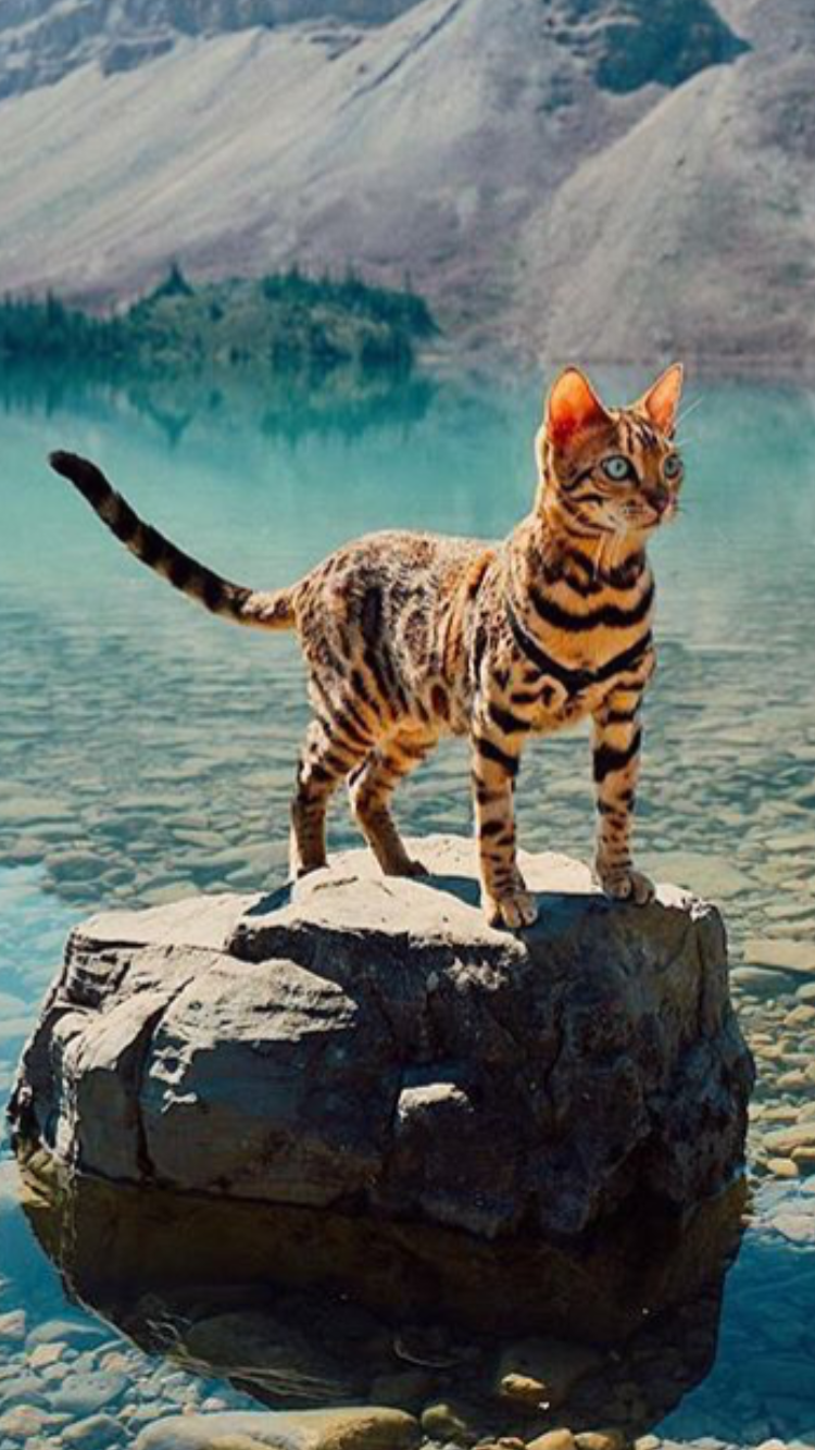 bengal-cats-are-so-beautiful