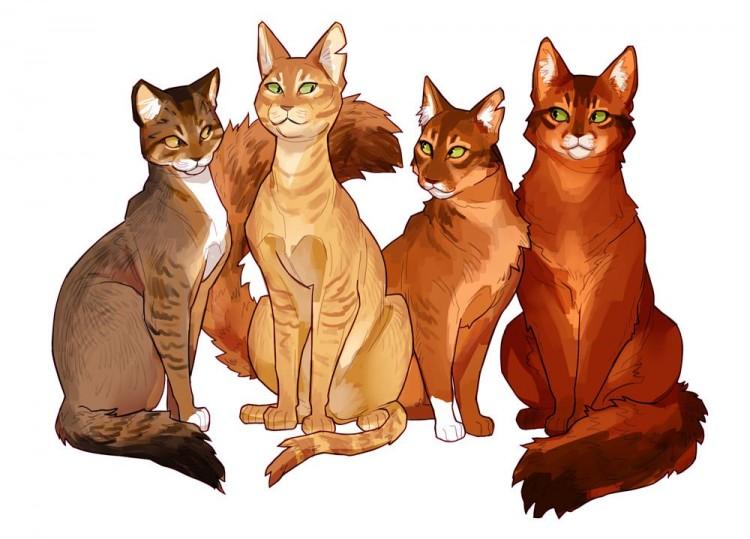 somali-cats