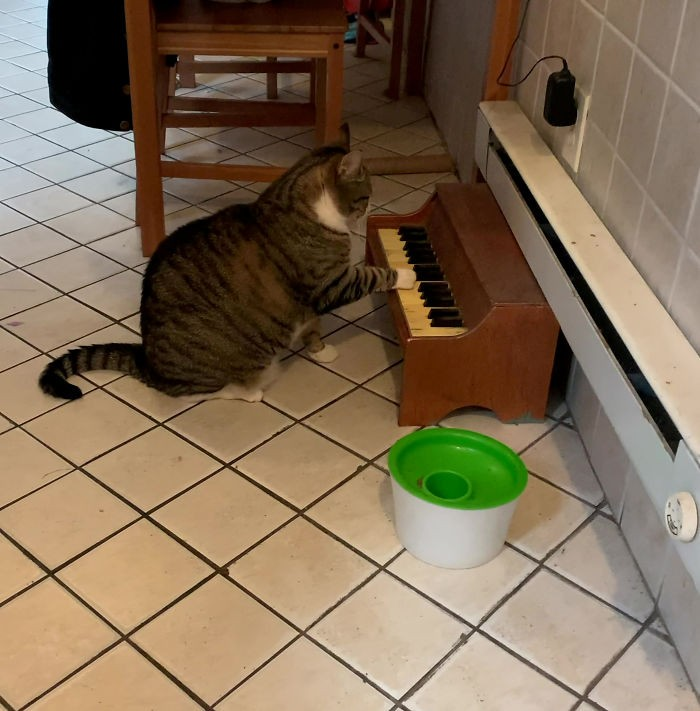 the-cat-plays-the-piano-every-time-he-wants-to-eat-and-as-you-understand-the-music-sounds-endlessly