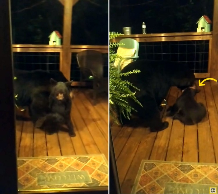 a-curious-bear-peeked-through-the-door-of-the-house-but-the-mother-bear-explained-that-this-should-not-be-done