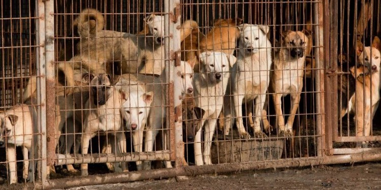 kim-jong-un-bans-north-korean-residents-from-keeping-dogs-at-home