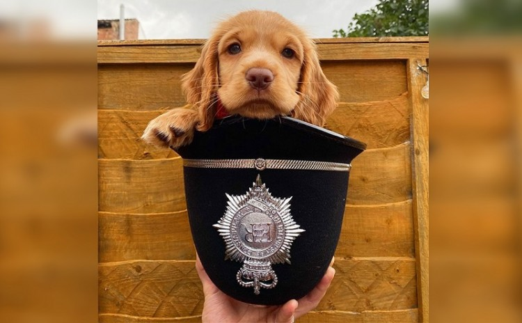 the-first-day-of-50-brave-police-puppies