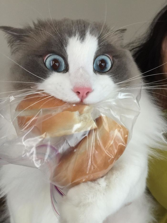 50-animals-caught-while-stealing-food-and-their-reactions-are-a-mixture-of-resentment-and-complete-indifference