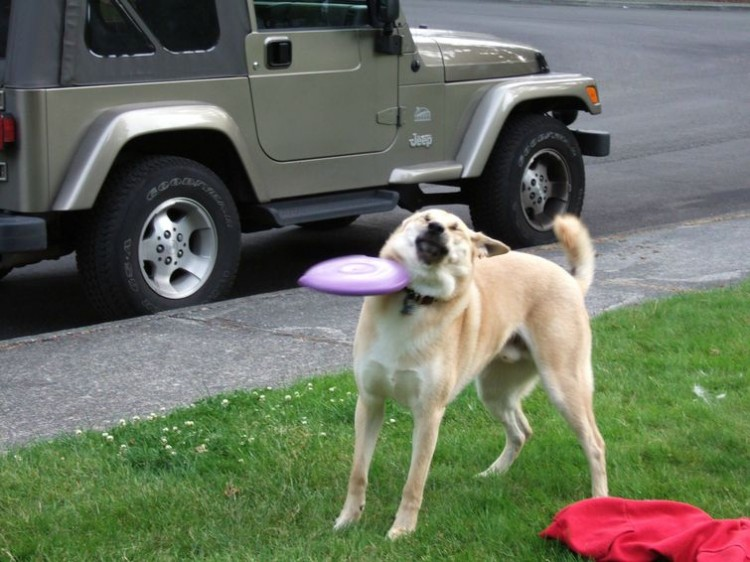 compilation-of-funny-moments-when-people-managed-to-take-funny-pictures-of-their-dogs