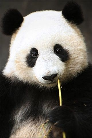 40-panda-posts-for-september-that-that-will-make-you-aww-new-funny-cute-compilation