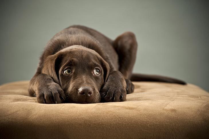 10-things-that-stress-our-dogs-and-cuddling-is-one-of-them