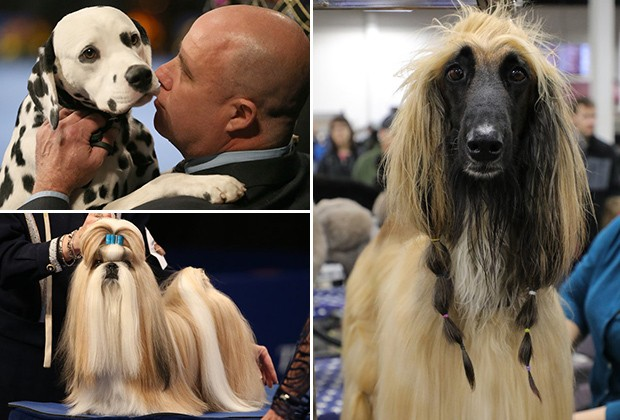30-funny-and-addorable-pictures-from-national-dog-show-on-thanksgiving-bemorepanda